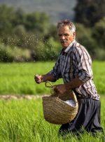 افزایش ۲۵ درصدی مستمریها در صندوق بیمه اجتماعی کشاورزان و روستاییان